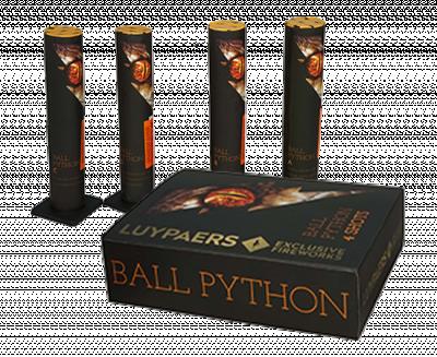 Ball Python 4 stuks