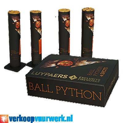 Ball Python (4st.)