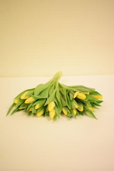 Bos tulpen Geel