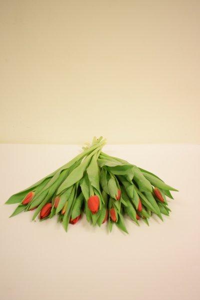 Bos tulpen Rood