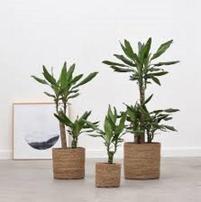 Combideals kamerplanten / potterie