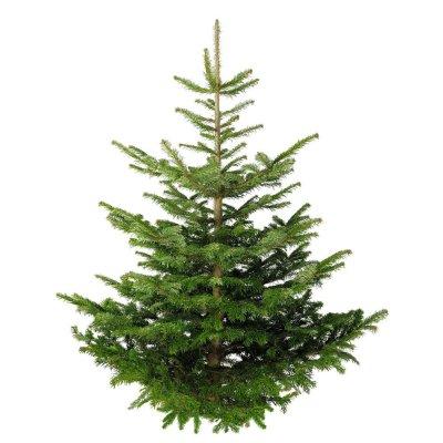 Kerstbomen kan je nog niet in de winkel kopen maar wel al online bestellen.