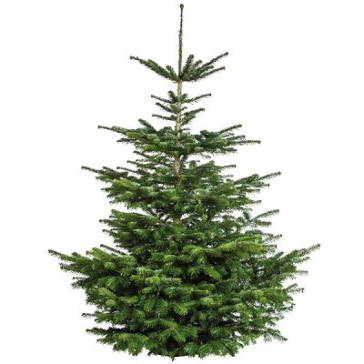 Kerstboom 275-300cm
