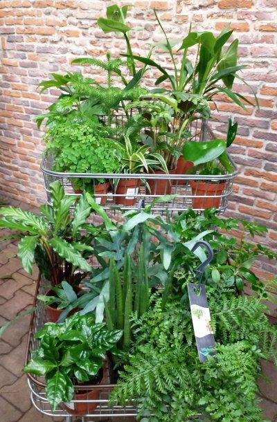 Plantenbox groen