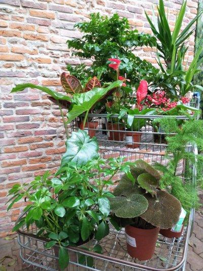 Plantenbox rood