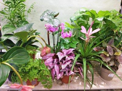 Plantenbox roze