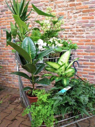 Plantenbox wit