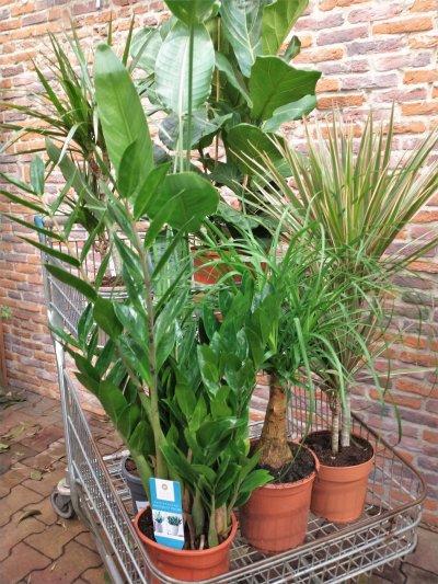 Plantenbox XL