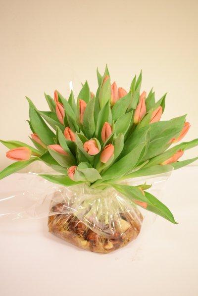 Tulpenzak Oranje