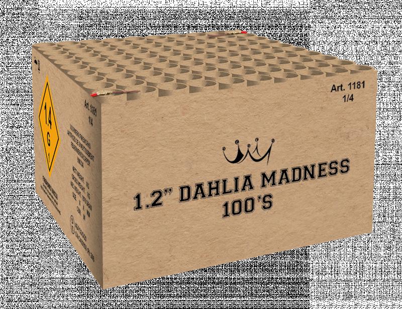 """1.2""""  Dahlia Madness 100'S"""