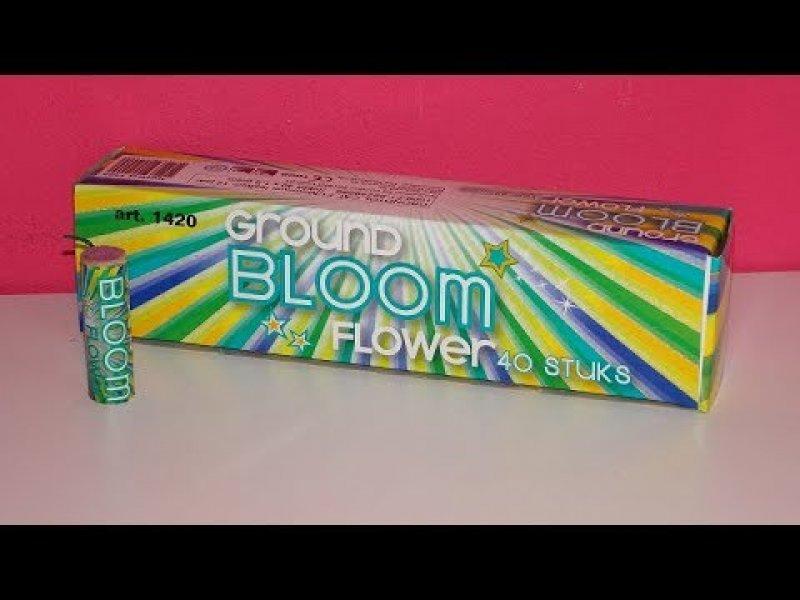 Grondbloemen 40 stuks